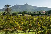 Wine, Monasteries Sant Salvador, Felanitx, Majorca, Balearic Islands, Spain