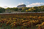 Wine Garden near Campanet, Tramuntana, Mallorca, Balearic Islands, Spain