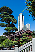 Wooden buildings and huge bonsai trees in the Nan Lian Garden in front of the scenery of the skyscrapers in Kowloon, Hong Kong, China, Asia