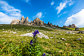 A meadow of the Alpe di Siusi with flowers and the mountain range Rosszahne, Siusi, South Tyrol, Alto Adige, Italy
