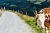 Two hikers on a forest trail in the Zillertal Alps, Königsleiten, Zillertal, Tirol, Austria