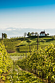 Apple plantation, orchard, Antonius chapel in Selmnau near Wasserburg, Lake Constance, in the back the Swiss Alps, Allgaeu, Bavaria, Germany