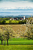 Blühende Obstbäume und Schweizer Alpenpanorama, Ausblick vom Höchsten, Bodensee, Baden-Württemberg, Deutschland