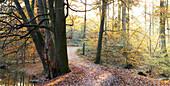 Naturpark Westensee, Rendsburg-Eckernförde, Schleswig-Holstein, northern germany, germany