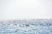 Windsurfing on Baltic Sea, Kellenhusen,  Schleswig Holstein, Germany