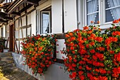Half-timbered houses with flower decoration in Hunspach, small village in Northern Alsace, North Vosges, France, member of the most beautiful villages of France, department Bas-Rhin.