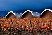Ysios Winery, Vineyard in autumn, La Rioja, Alava, Basque Country, Spain, Europe.