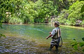Tourists fly fishing with fishing guide in Lake Taupo area stream in New Zealand.