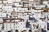 Brilliantly whitewashed houses in Alcala de los Gazules. Cadiz province, Andalusia, Spain.