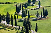 Road with cypresses. Orcia Valley, Siena district, Tuscany, Italy.