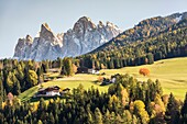 Autumnal landscape with Odle Dolomites peaks on the background. Santa Maddalena, Val di Funes, Trentino Alto Adige - Sudtirol, Italy, Europe.