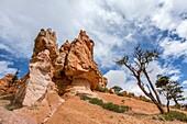Rock formations along Navajo Loop Trail. Bryce Canyon National Park, Garfield County, Utah, USA.