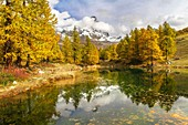 The Matterhorn stands out among the clouds and it is reflected in the small lake Blu surrounded by colorful trees in autumn (Cervinia, Valtournenche, Aosta province, Aosta Valley, Italy, Europe).