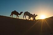 Sahara desert, Morocco. Silhouette on the dunes at sunset.