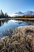 Grass covered in frost on the shores of Entova Lake. Valmalenco, Valtellina, Lombardy, Italy Europe.