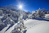 Rays of winter sun illuminate the snowy landscape around Maloja Canton of Graubünden Engadine Switzerland Europe.