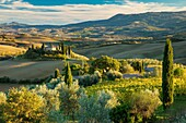 Late afternoon sunlight on the Belvedere and countryside of Val d'Orcia near San Quirico, Tuscany, Italy.