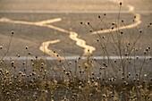 Plants anf fence by a road, Almansa, Albacete province, Castilla-La Mancha, Spain