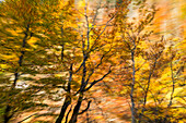 Moved trees, abstract, autumn, Bavaria, Germany, Europe