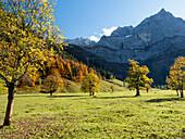 autumn colors in the Eng, maple, Acer pseudoplatanus, Austria, Europe