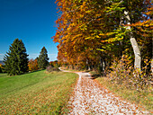 hiking trail in autumn, beech trees, Fagus sylvatica, Upper Bavaria, Germany, Europe