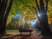 A bench at a small lake in the Englischer Garten, framed by autumnal broad leaf trees, Munich, Upper Bavaria, Germany