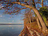 View along the eastern shore of lake Starnberg in a northerly direction in late Autumn, Ambach, Upper Bavaria, Germany