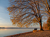 A bench under a tree on the eastern shore of lake Starnberg in the direction north in late Autumn, Ambach, Upper Bavaria, Germany