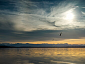 Winter sunshine over lake Starnberg with view to the Alpine peaks, Ambach, Upper Bavaria, Germany