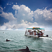 BELIZE, Punta Gorda, Toledo, guests can go fishing on their way out to their snorkeling tour, all of the guides are local to the Southern Belize region and are extremely patient and professional, Belcampo Belize Lodge and Jungle Farm