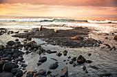 GALAPAGOS ISLANDS, ECUADOR, Galapagos Sea Lions playing on the beach of Fernandina Island