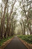 USA, Hawaii, The Big Island, mountain biking down mud lane from road 19 down to road 240