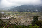 INDONESIA, Flores, landscape of the Lingko or Spider Web Rice Fields in Cancar