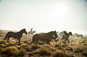 USA, Nevada, Wells, Mustang Monument, A sustainable luxury eco friendly resort and preserve for wild horses, Saving America's Mustangs Foundation