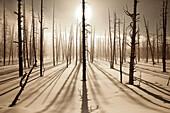 USA, Wyoming, Yellowstone National Park, Bobby Sock Trees, Lower Geyser Basin