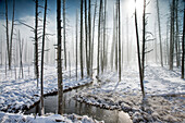 USA, Wyoming, Yellowstone National Park, Tangle Creek runs through Bobby Sock Trees, Lower Geyser Basin