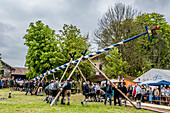 maypole, bavarian tradition, Bavaria, Germany, Europe