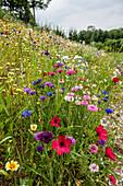 flowery meadow, Austria, Europe