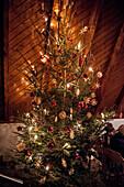 Christmas tree, Catholic, Christian, tradition, ancient customs, Advent, Advent season, Bavaria, Germany, Europe