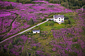 Aerial View Of A Residential Home Surrounded By Fireweed On Diamond Ridge, Homer, Southcentral Alaska, USA
