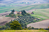 An Idyllic Tuscany Landscape With Rolling Green Hills, Small Olive Grove And Stone Private Villas Near Castiglione D'orcia; Tuscany, Italy