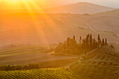 The intense sun rays of the morning sun illuminate layered Tuscany green hills, vineyard and the small Podere Belvedere villa near San Quirico D'orcia; Tuscany, Italy