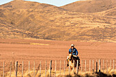 A gaucho is riding his horse along his property of bare desert hills; Potrerillos, Mendoza, Argentina
