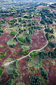 Aerial View Of A Road And Land Development Among Trees And Fireweed (Chamaenerion Angustifolium) On Kenai Peninsula; Alaska, United States Of America