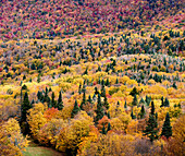 Dramatic Autumn Colours On A Forested Landscape; Dunham, Quebec, Canada