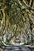 The Dark Hedges From The Game Of Thrones Television Series, Beech Trees Along A Road; Ballymoney, Ireland