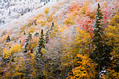 Autumn Colours In Snow On Sugarloaf Mountain, A Protected Crown Wilderness Area Along The Northeast Margaree River At Big Intervale; Cape Breton Island, Nova Scotia, Canada