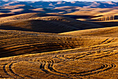 Harvested Fields On Rolling Hills With Shadows Cast At Sunset; Washington, United States Of America
