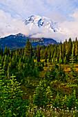 Mount Rainier, Mount Rainier National Park; Washington, United States Of America