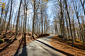 An Asphalt Road Through The Amiata Mountain Covered By Golden And Yellow Deciduous Dead Leaves From Surrounding Beech Forest; Tuscany, Italy
